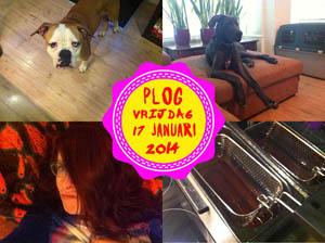 Vorig jaar hadden we een hond te logeren die in huis poepte... GATVERDAMME!